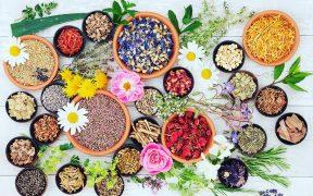 www.akcnemamy.sk: liečivé bylinky