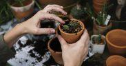 www.akcnemamy.sk: zahradnictvo