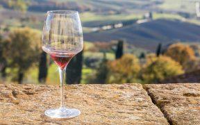 víno, hrozno, oberanie