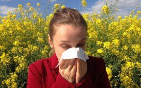 alergiu