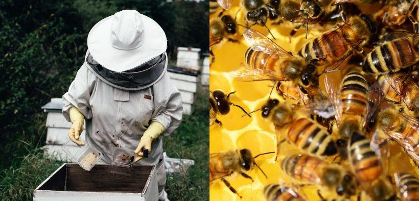 deň včiel